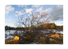 Ansichten - von der Landschaftspflege
