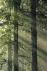Ansichten ... von der Waldandacht