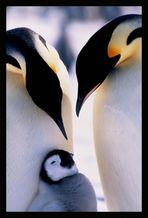 + Antarctic affection +
