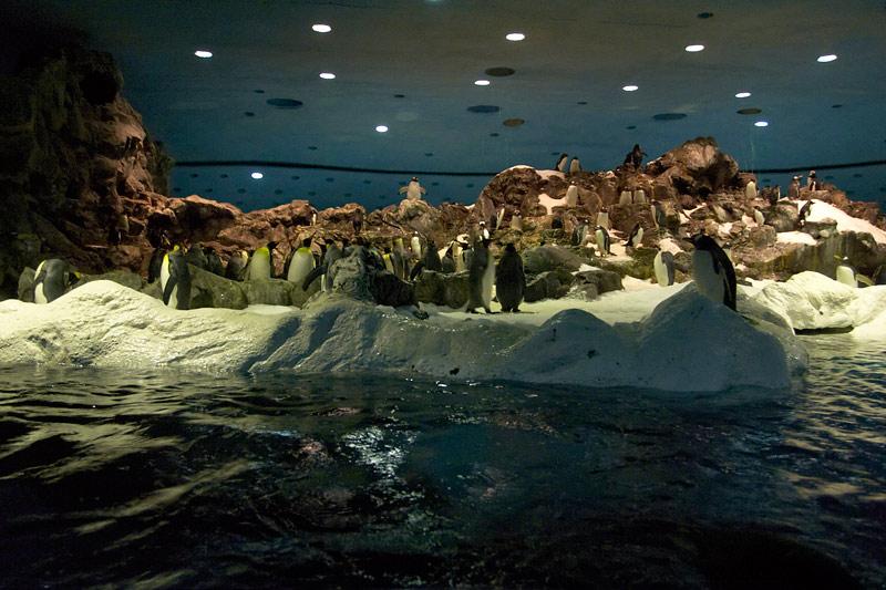 Antarktis im Loro Parque