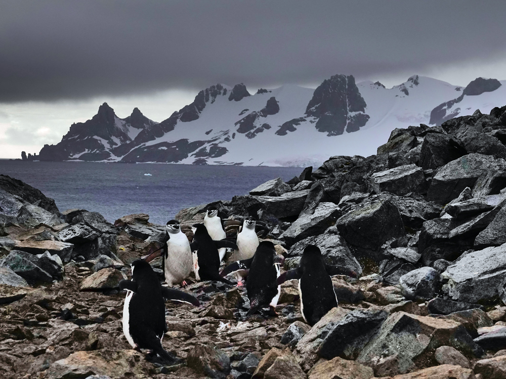 Antarktis-Landschaft
