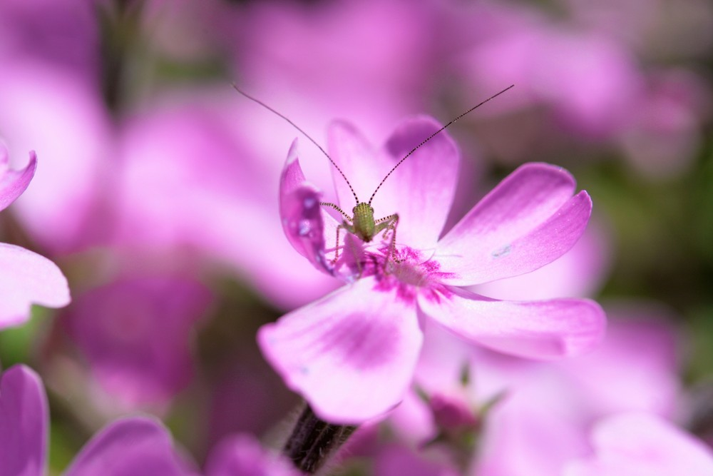Antennen Raus der Frühling ist da und der Sommer kommt bestimmt.....