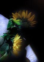 Antes, se besaron al borde de las sombras: retratos de Girasoles Fin