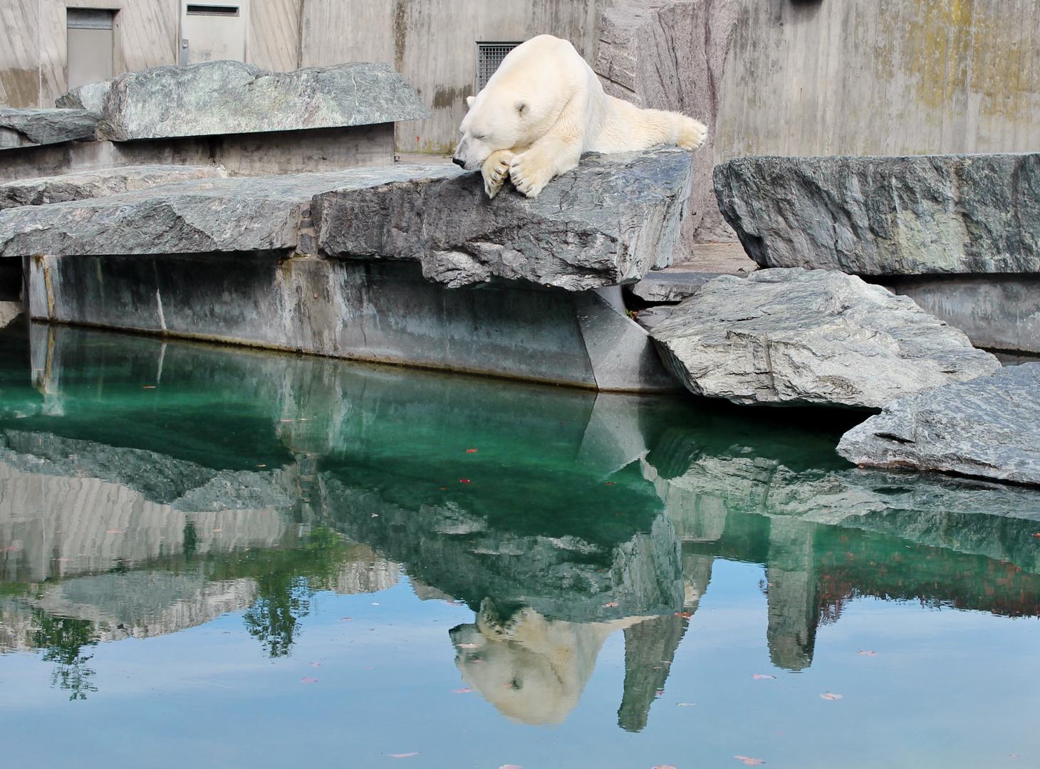 Anton, der Eisbär