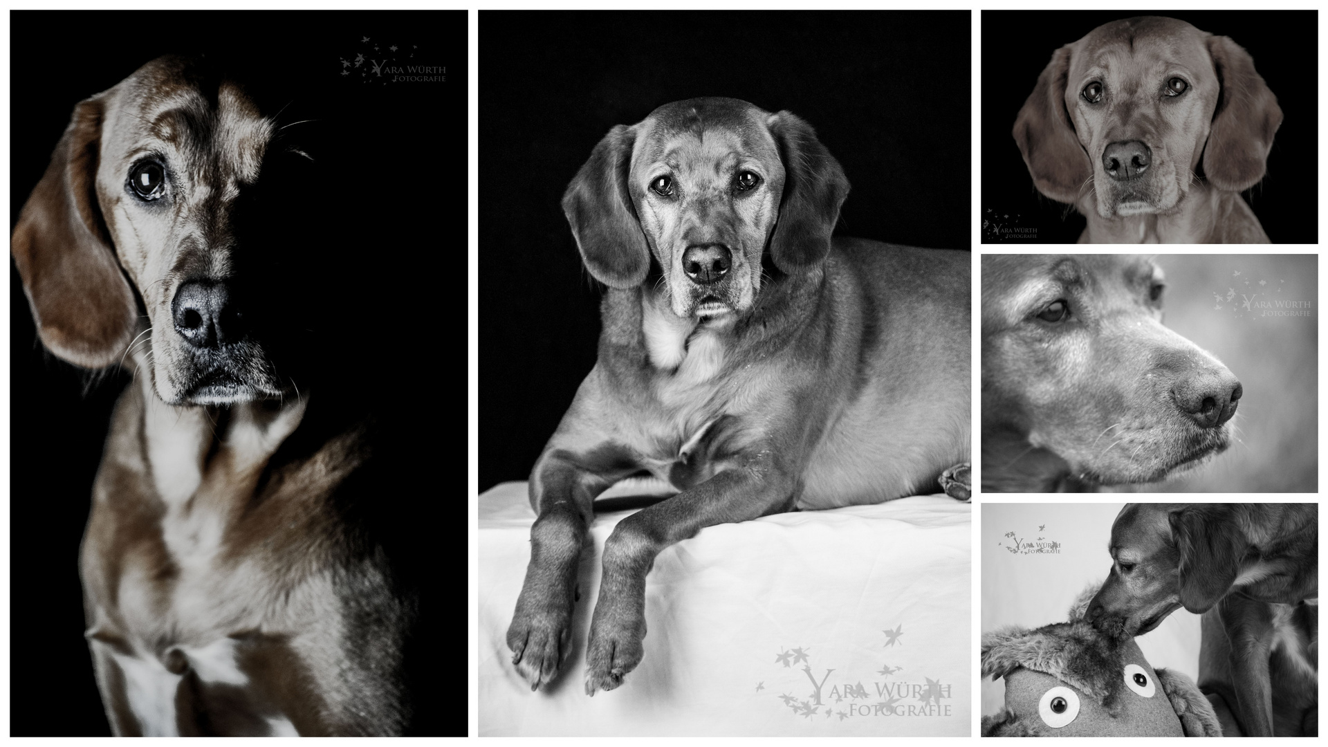 Anton - ein ganz besonderer Hund