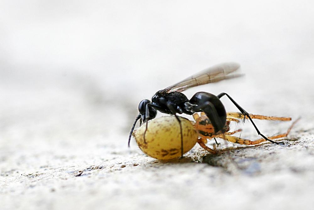 -ANTS -