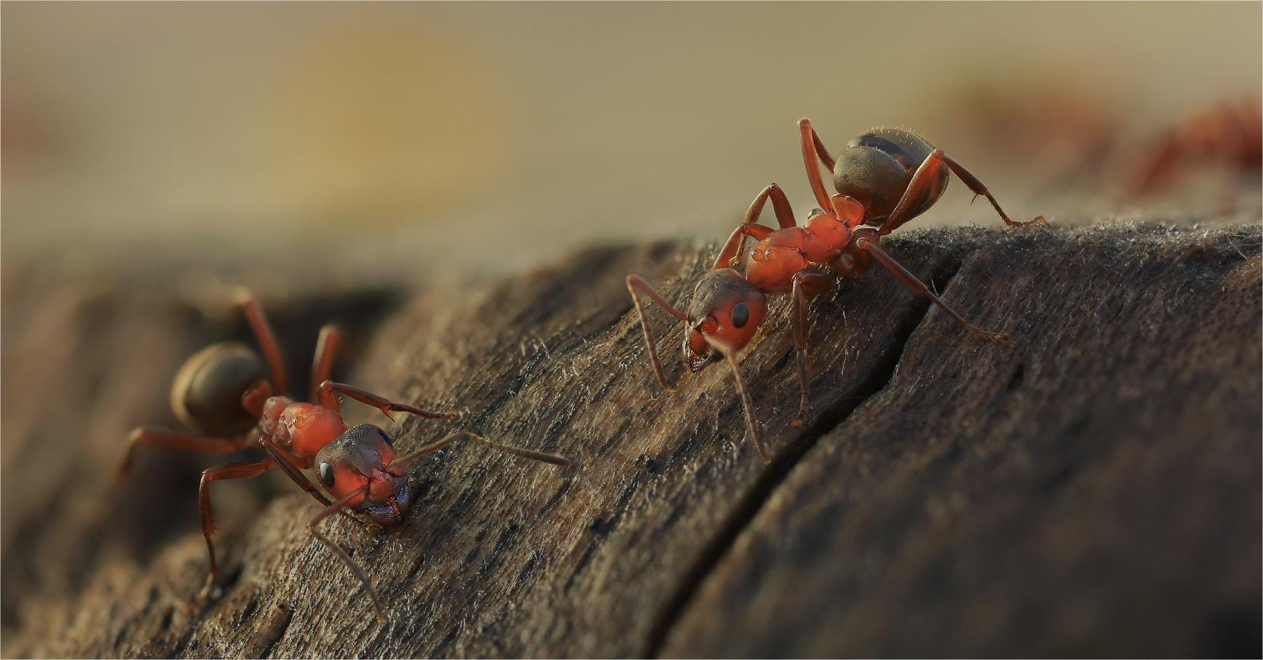 Ants...three