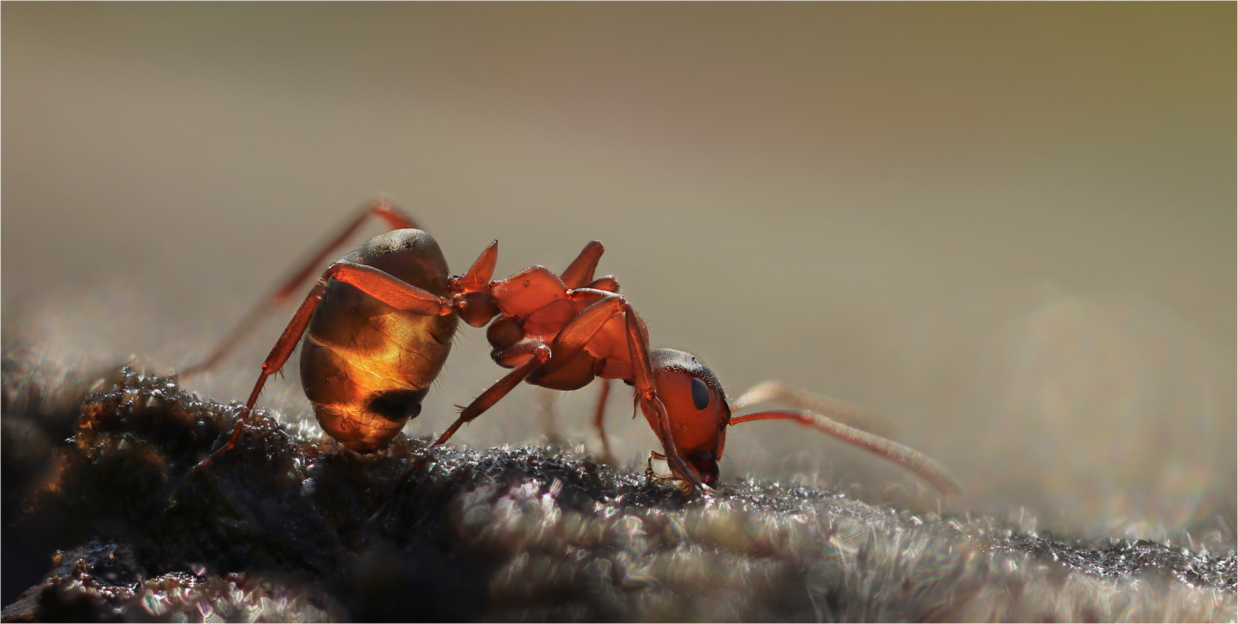 Ants...two