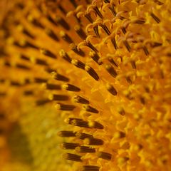 Anziehungspunkte für Bienen
