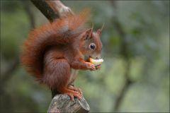 Apfel-Hörnchen ...