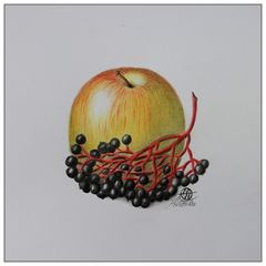 Apfel - Holunder