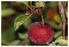 Apfel mit Eisglasur