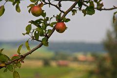 Apfel-Ornament