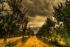 Apfelbäumchen in der Goldenen Stunde