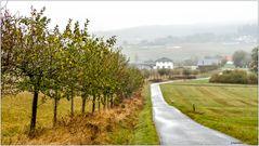 Apfelbäume in Zilsdorf