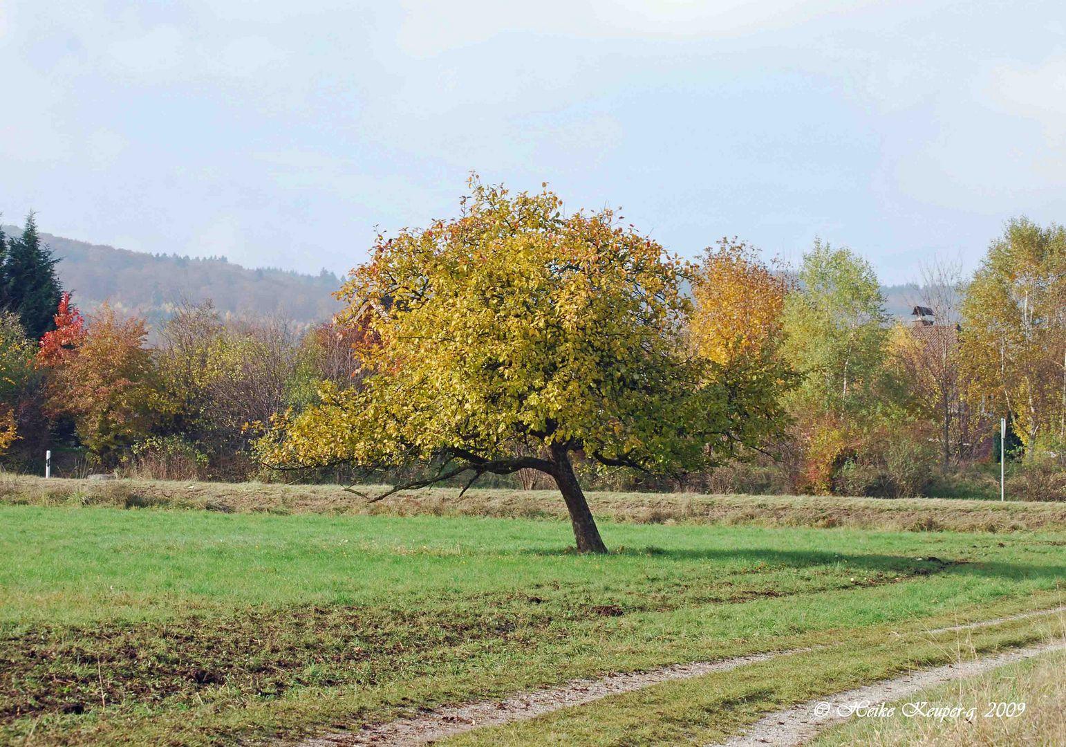 Apfelbaum im Herbstbunt