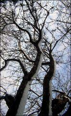 Apfelbaum im Jahr 1995