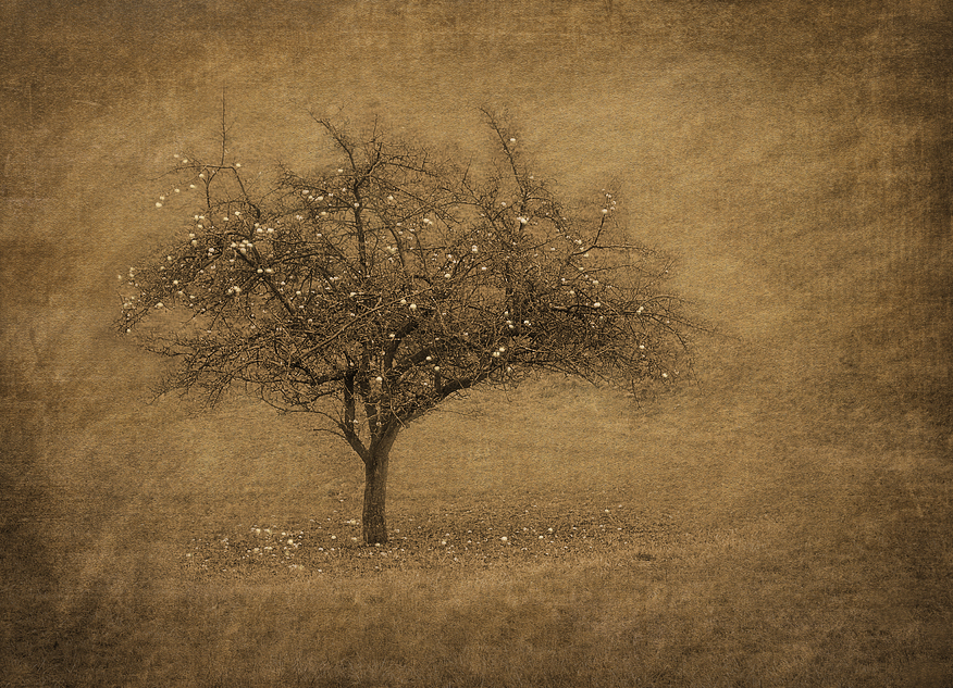 Apfelbaum Textur 1