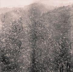 Apfelblüte im Schwarzwald - satellitengestützt