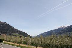 Apfelblüte in Tirol