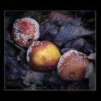 10 Spezial - Herbst