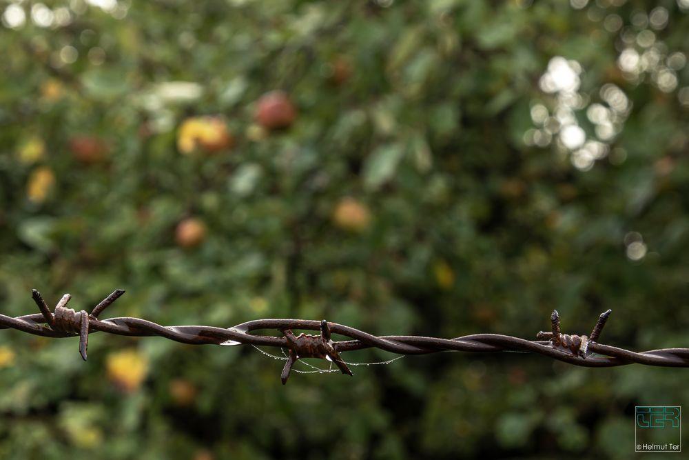 Apfelplantage, gut gesichert