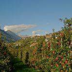 Apfelplantage mit...