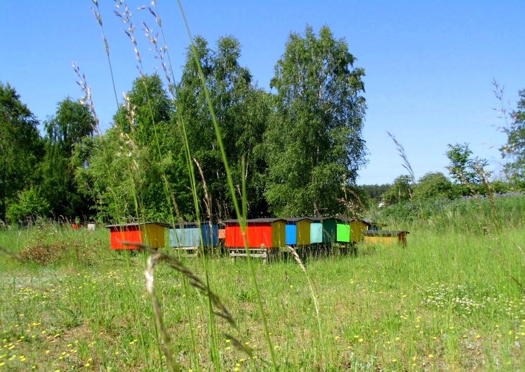 Apiary in the countryside