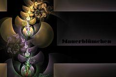 Apophysisches Mauerblümchen II
