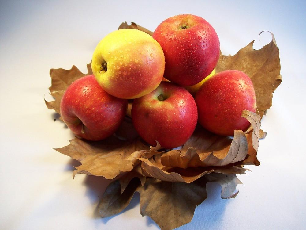 Appleseed (Best Mecha)
