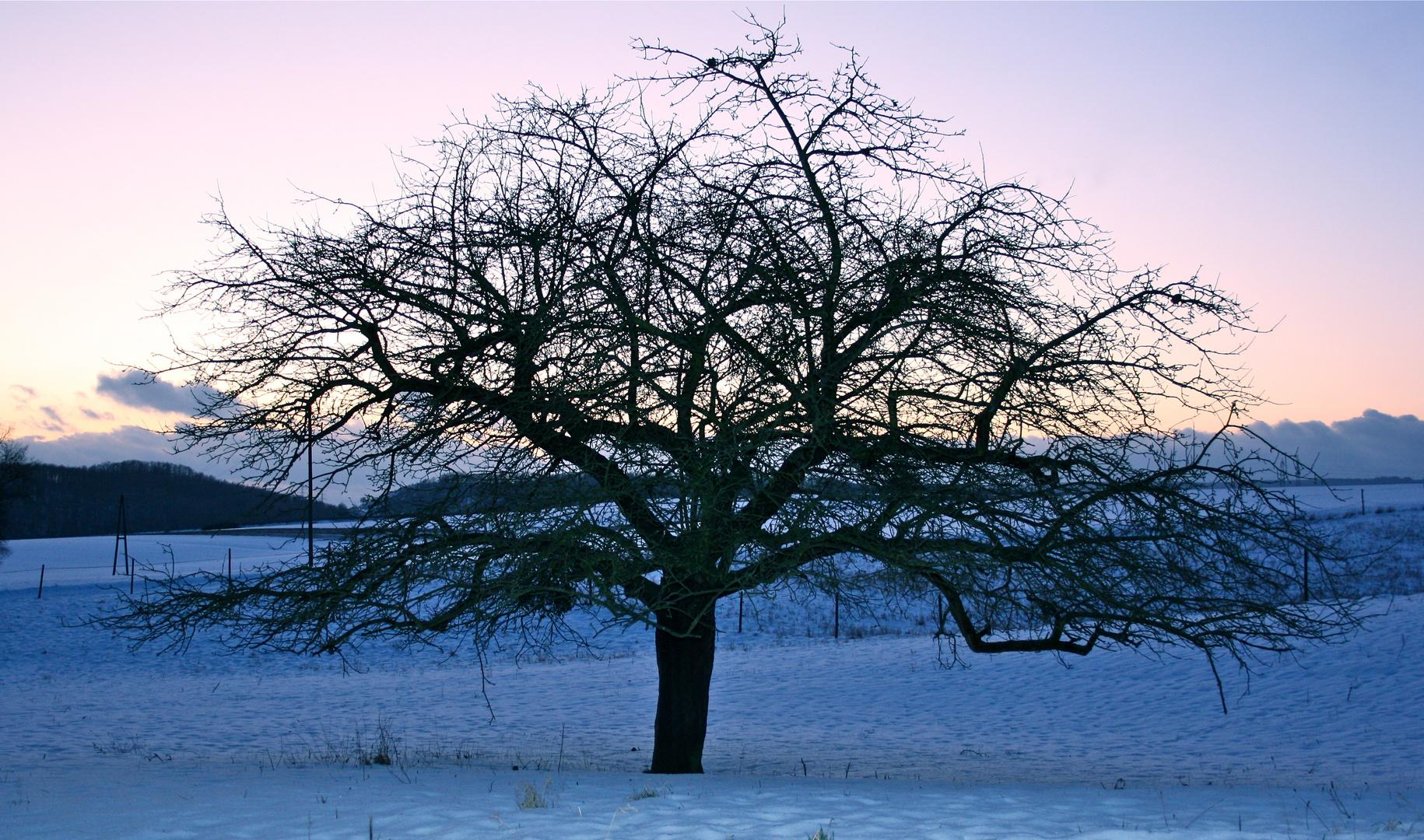 Appletree Blues