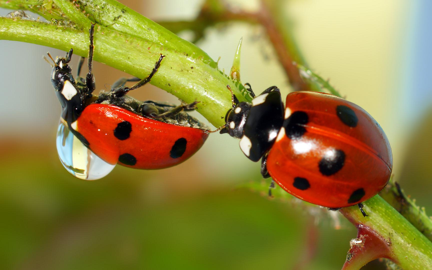 #appy beetles