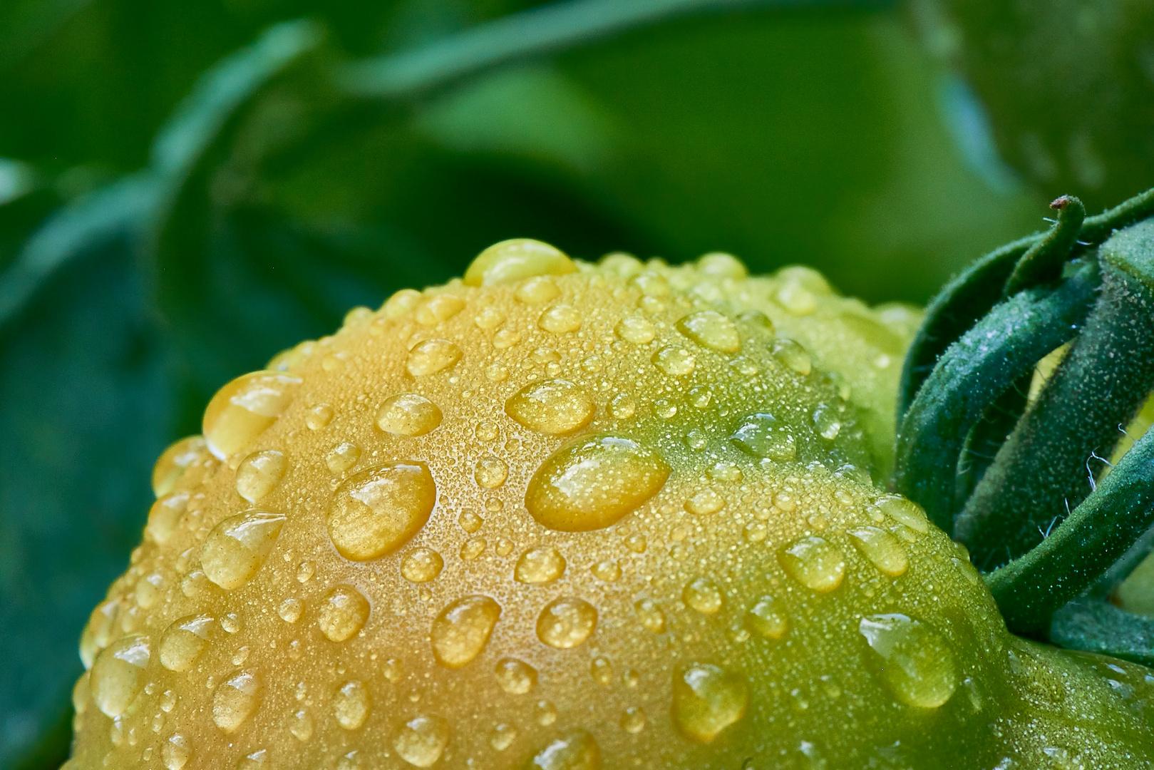 Après la pluie...