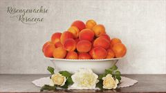 Aprikosen, Marillen, Prunus armeniaca..