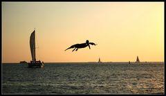 April Fool's Day Pelican in Key West