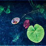 aquaplaning (2)