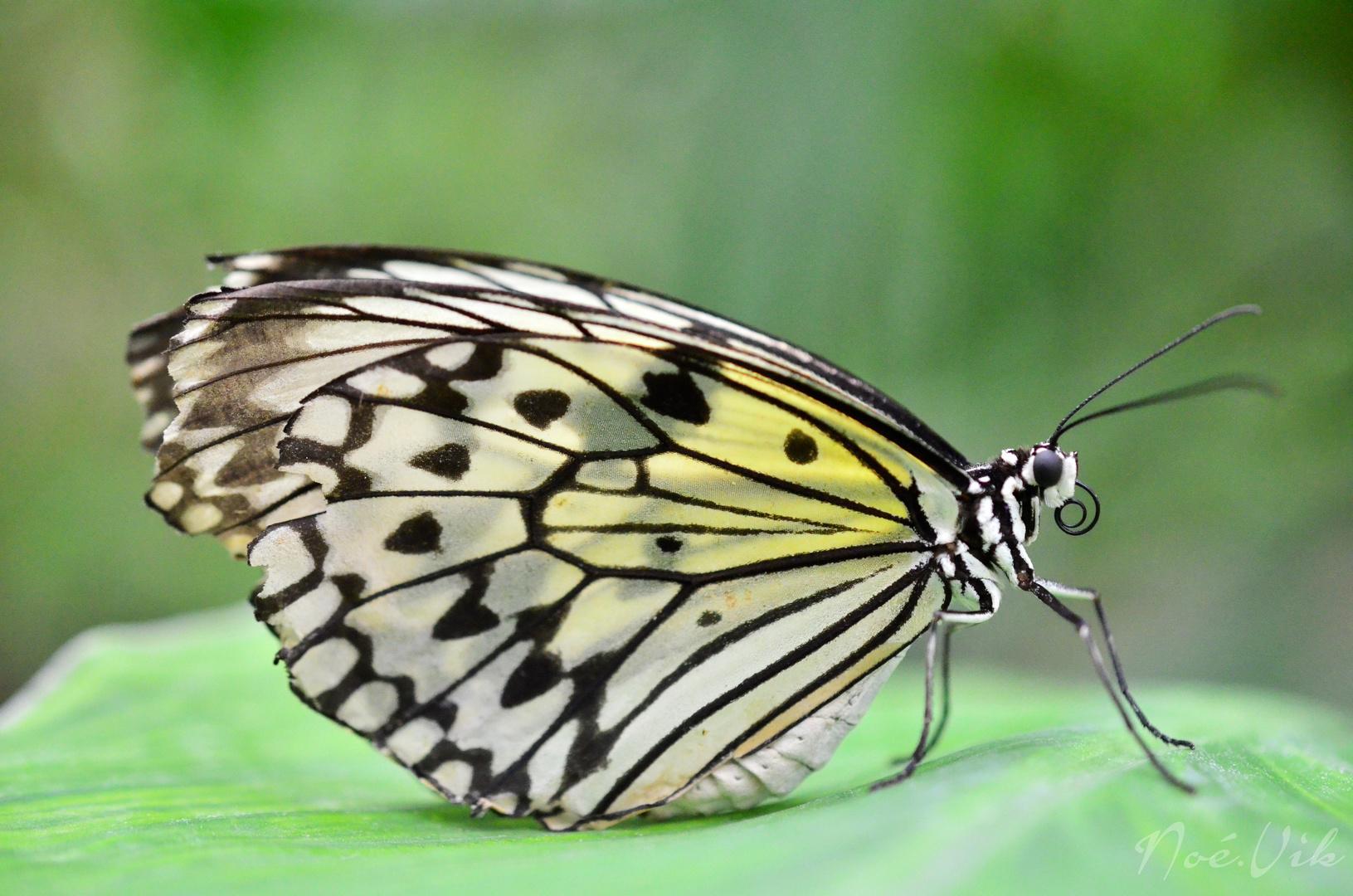 Aquar-ailes...