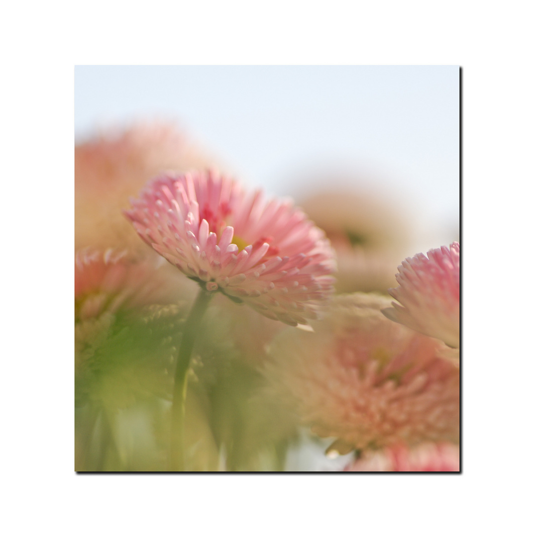 Aquarell mit Gänseblümchen