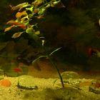 Aquaria nature