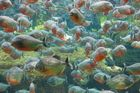 Aquarium Bla Planet 1