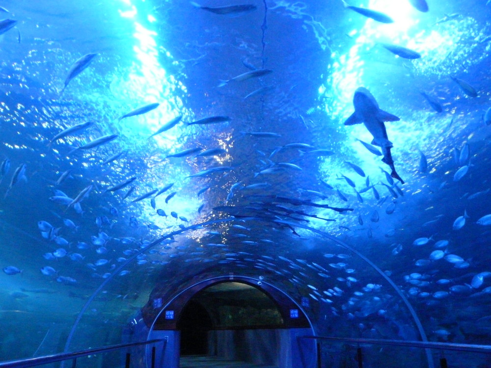 aquarium donostia 1