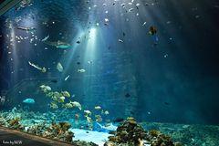 Aquarium Foto Versuch 1
