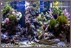 Aquarium - Terrazoo Rheinberg