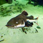 Aquarium - Zoo Duisburg
