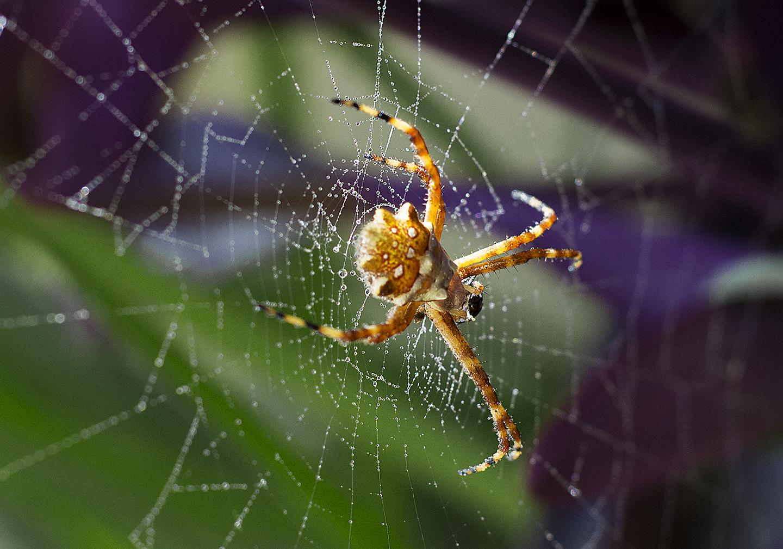 Araña en mi jardín