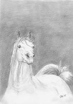 ArabianStallion
