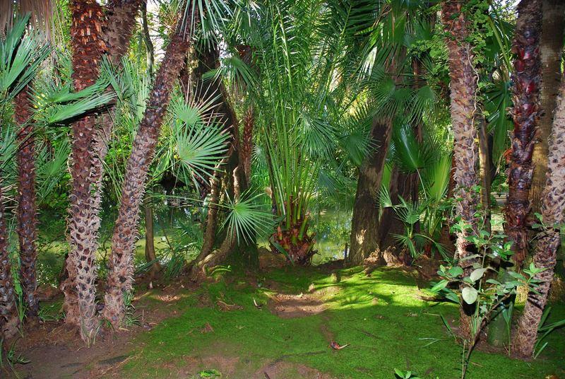 Arabischer Garten 4
