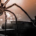 Arachnophilia