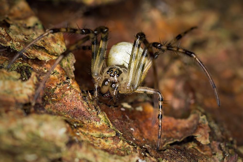 arachnophobia?