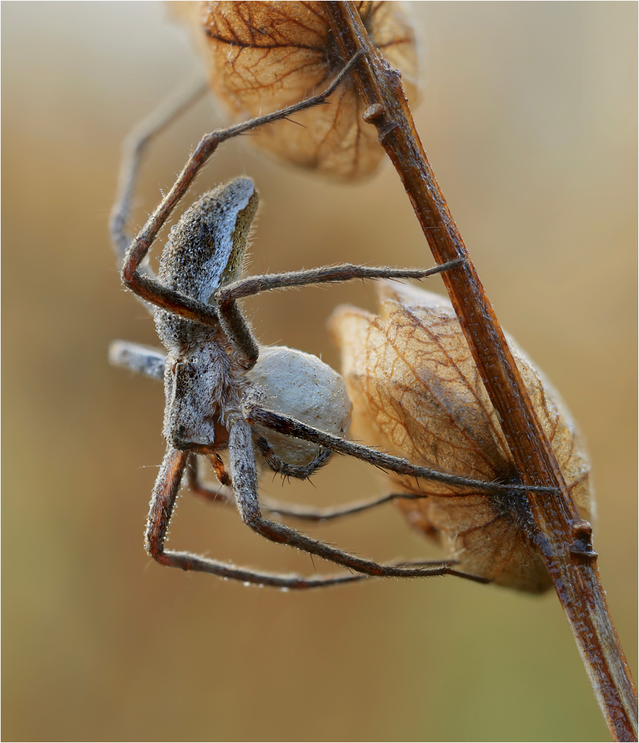 Arachnophobia 3